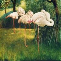 Flamingos at Rest