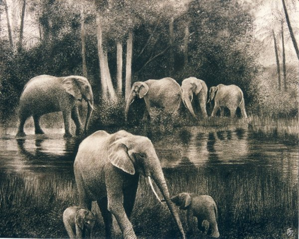 Charcoal-forest-elephants