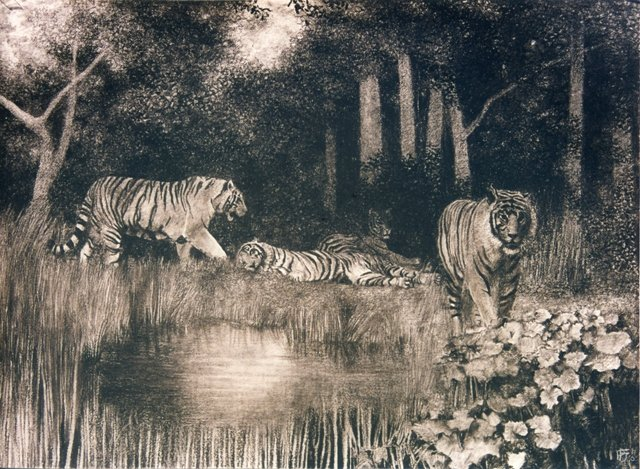 -Tigers-in-forest