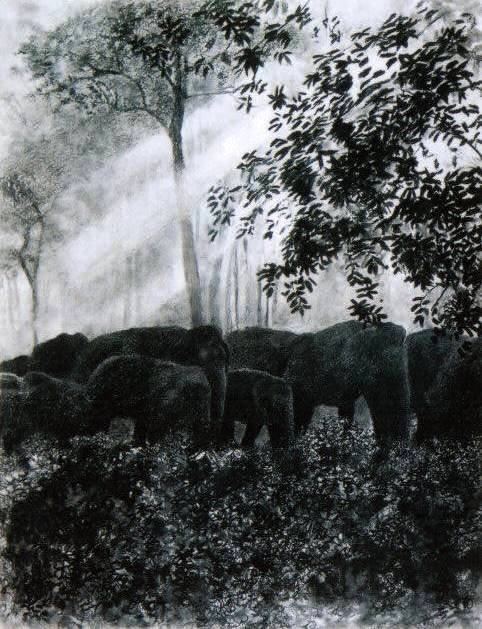 -Elephants-in-the-glade
