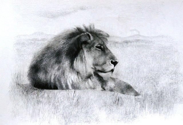 Lion-Study