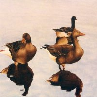 3 Geese Card