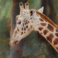 Giraff Portrait