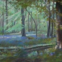0522-Bluebells-in-Nature-Reserve