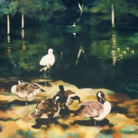 Pond with Geese