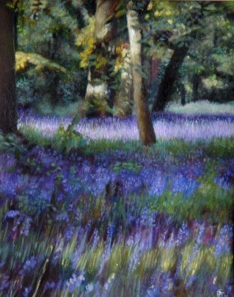 Bluebells at Bruern