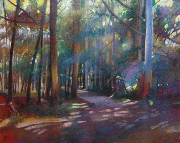 Eucalyptus Trees . Camino de Santiago