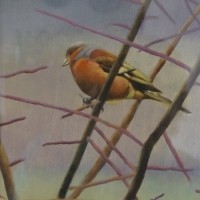 Hedgerow (Chaffinch)