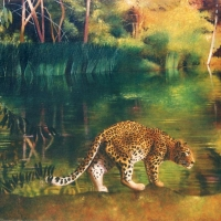 Leopard at the Pond