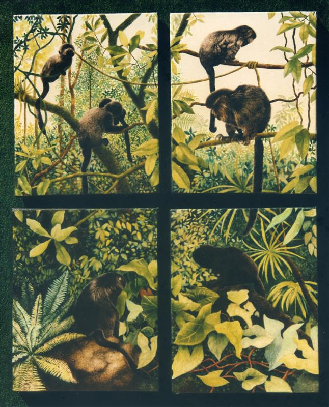 Monkey Panels